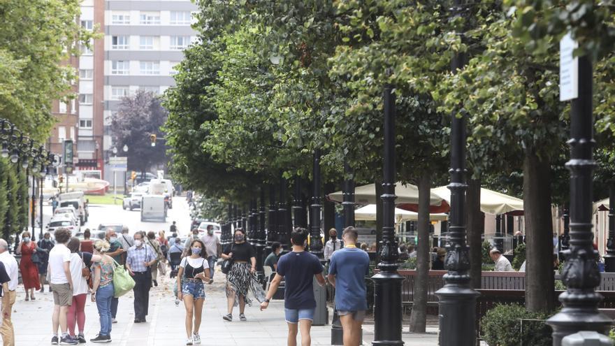 Un plan para el arbolado fijará las medidas a 20 años sobre los 36.160 árboles municipales