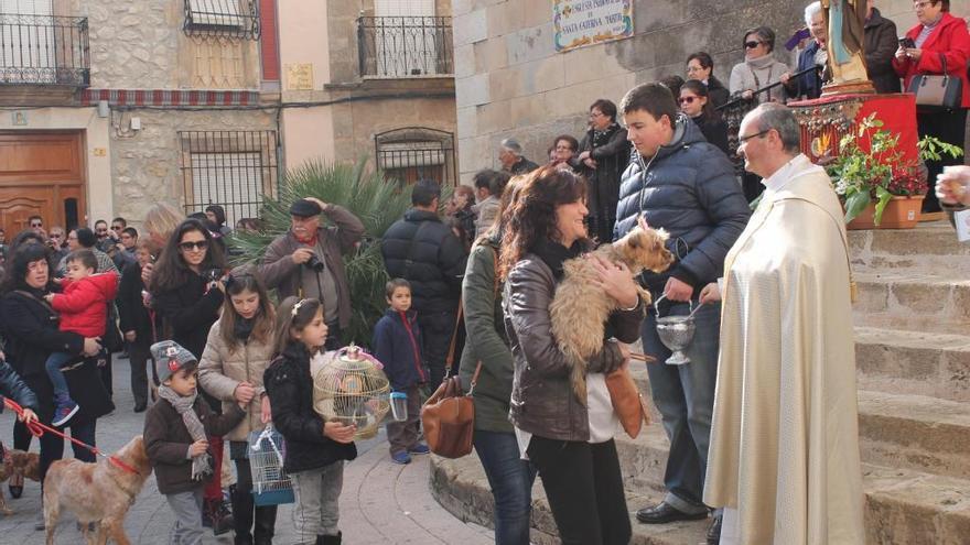 Una protectora pide a la iglesia de Teulada que acuda a bendecir a los perros de caza