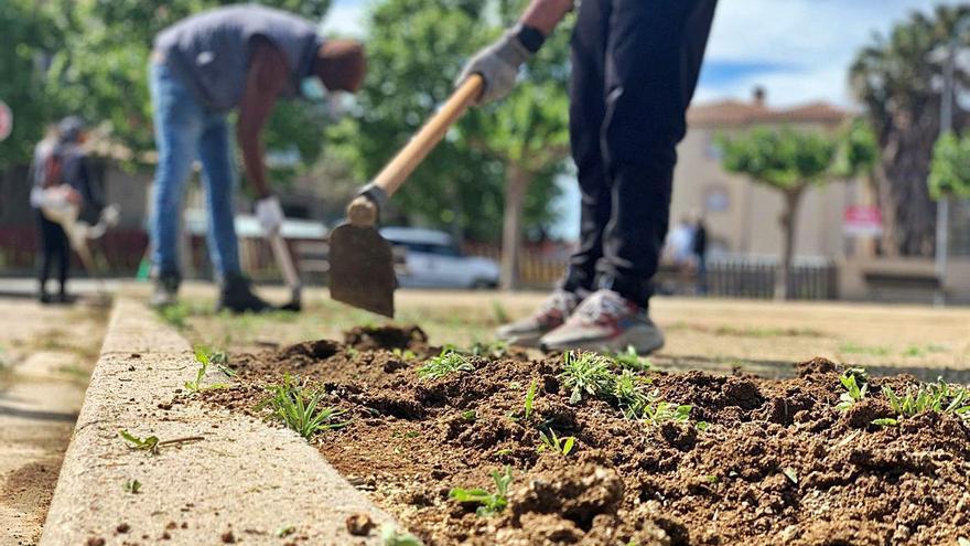 Prova pilot a Castelló per tractar la vegetació sense herbicides