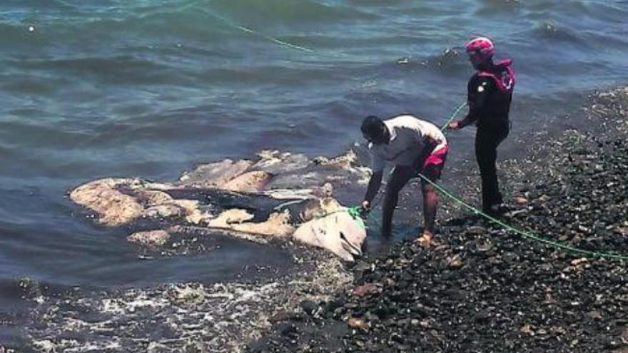 Un delfín varado en la playa de Bahía Feliz