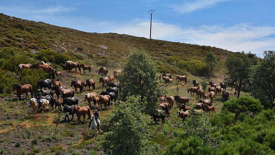 Trashumancia en Zamora | Al trote por el cordel sanabrés
