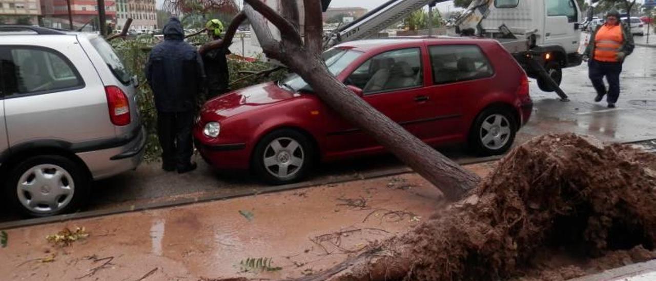 Caída de un árbol en la Plaça de la Generalitat como consecuencia del temporal de diciembre.