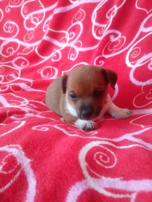 Cachorro de pocos meses.