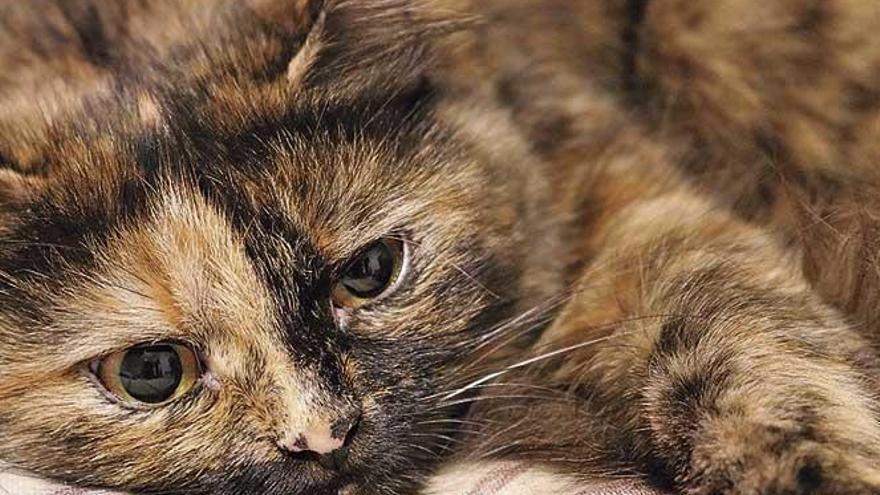 Estrés postraumático en animales