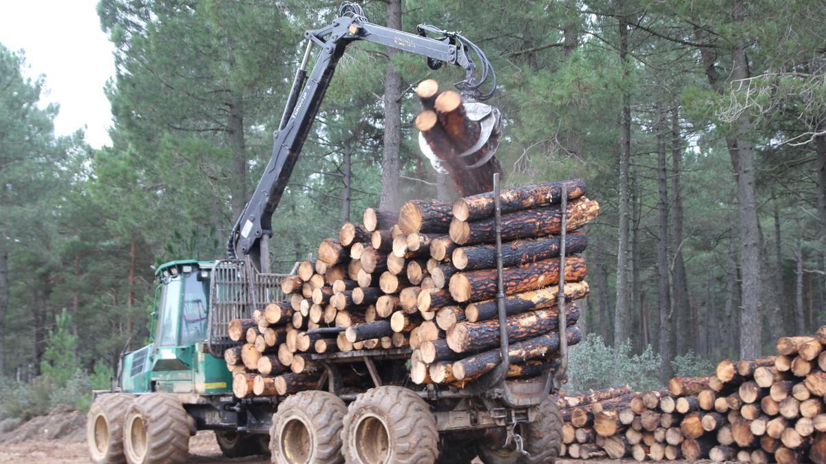 Extracción de madera en un monte de Aliste