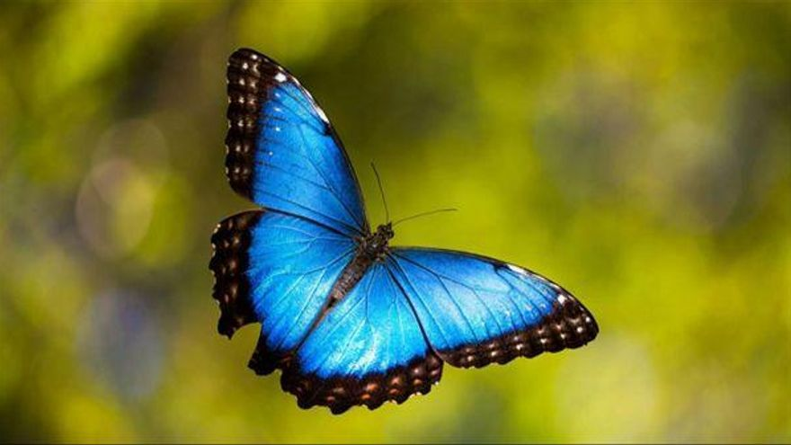 «Què sabem de les papallones?» amb Fundació Emys