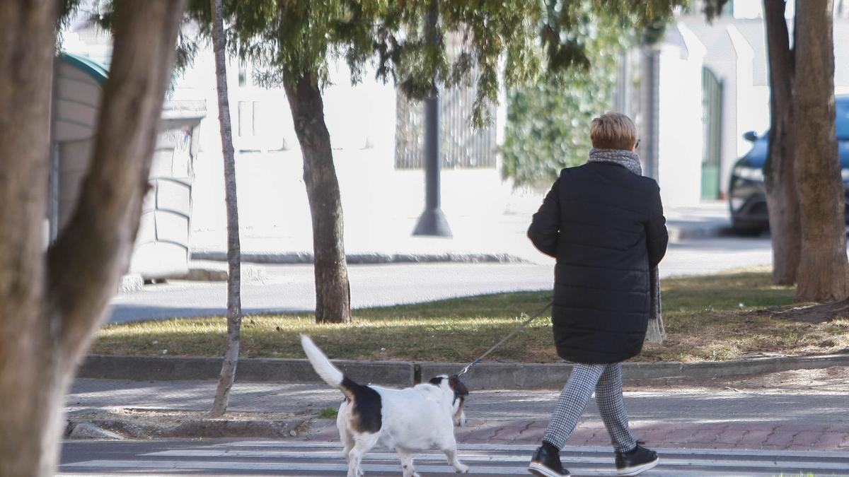 Una mujer pasea a su perro por las calles de Zamora