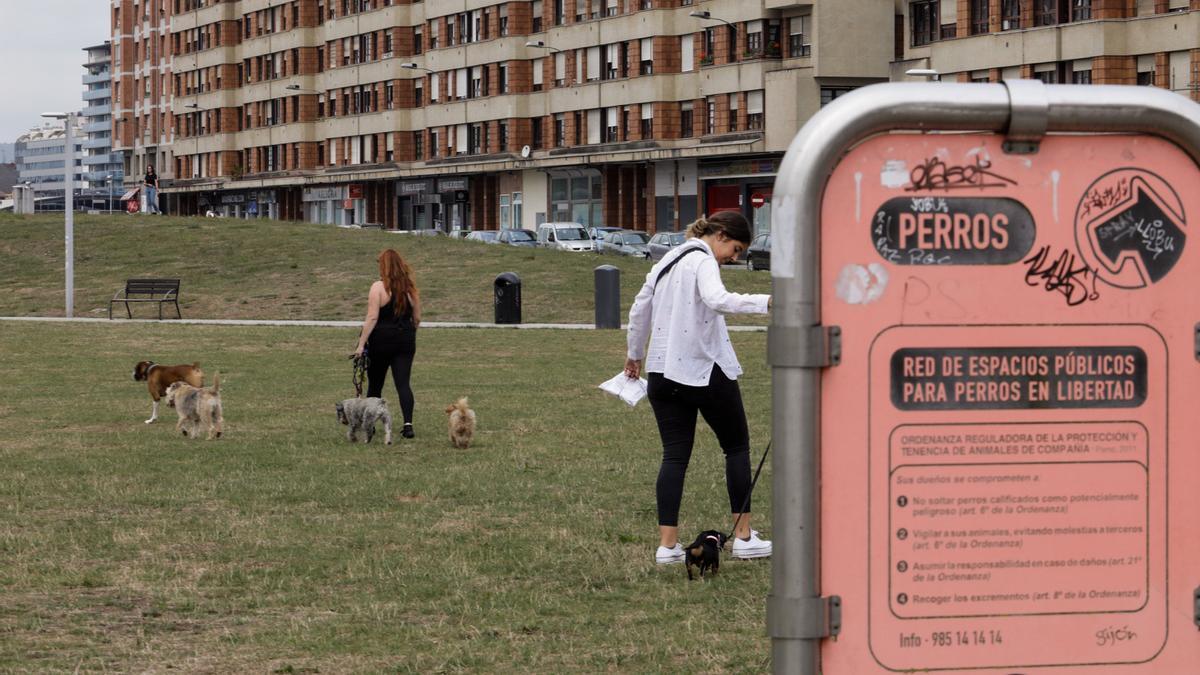 """Zona para perros en el """"solarón""""."""