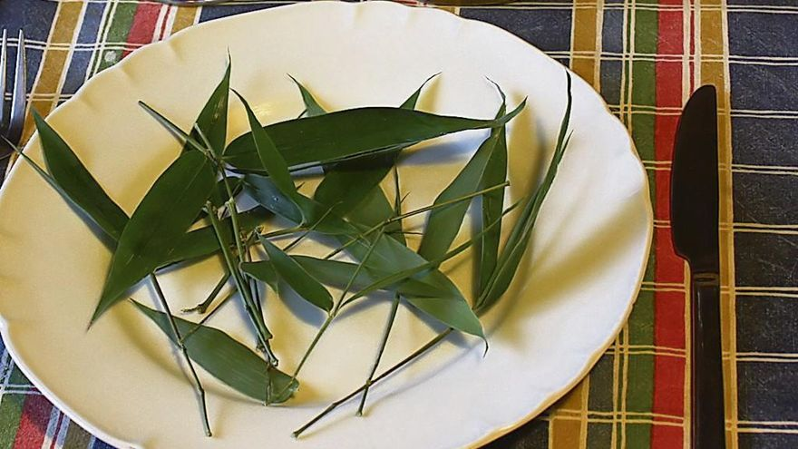 El bambú de Susana Blair