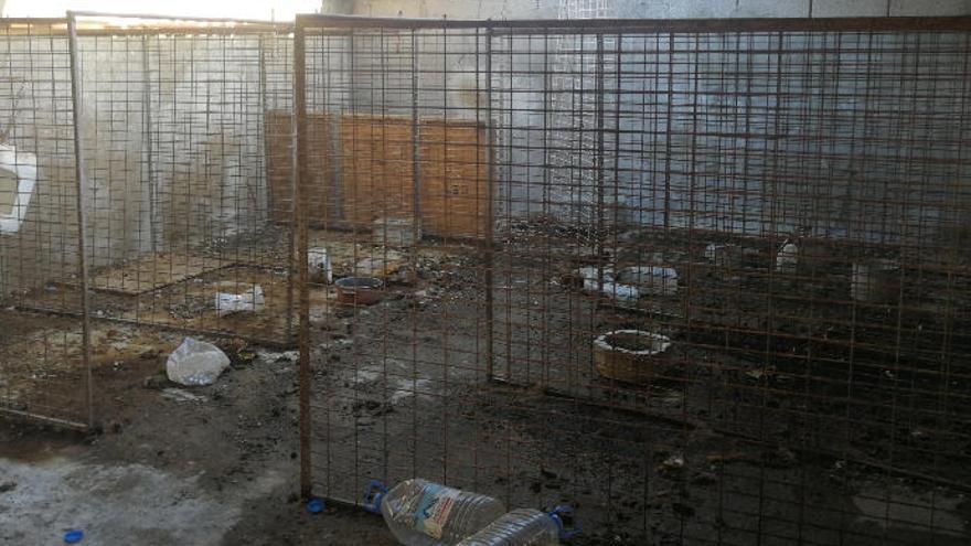 Detenido por matar de hambre a siete podencos canarios