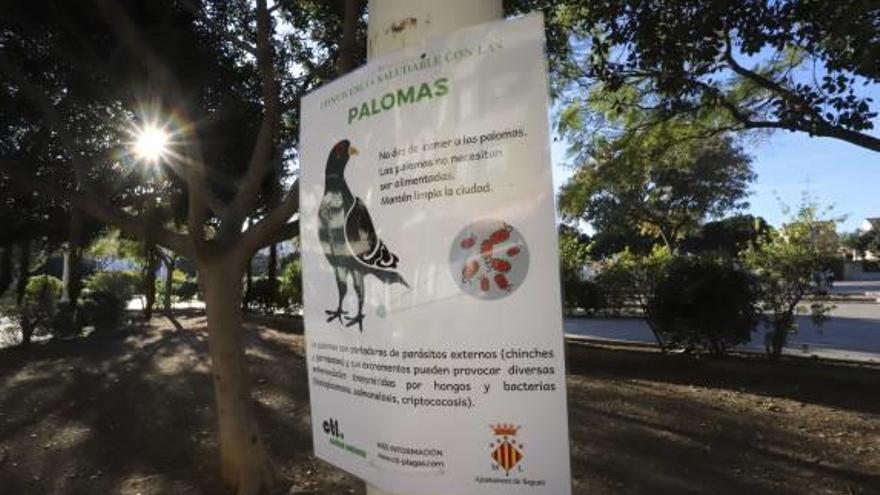 Sagunt informa de  los «riesgos» de dar de comer a las palomas