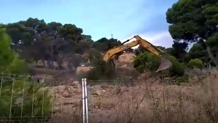 Arrancan los primeros árboles de la pinada Cuatro Picos