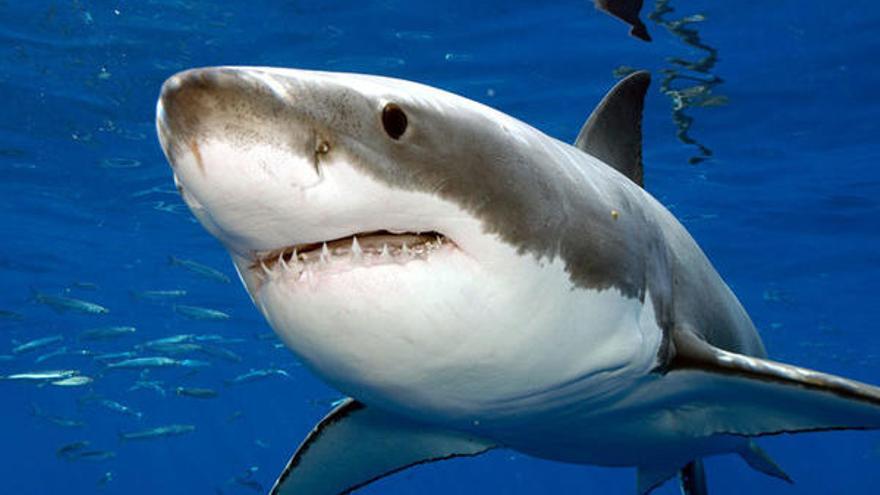 Vuelve a Discovery un clásico del verano: la Semana del Tiburón 2020