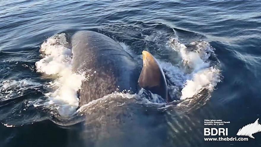 El regreso de una ballena fiel