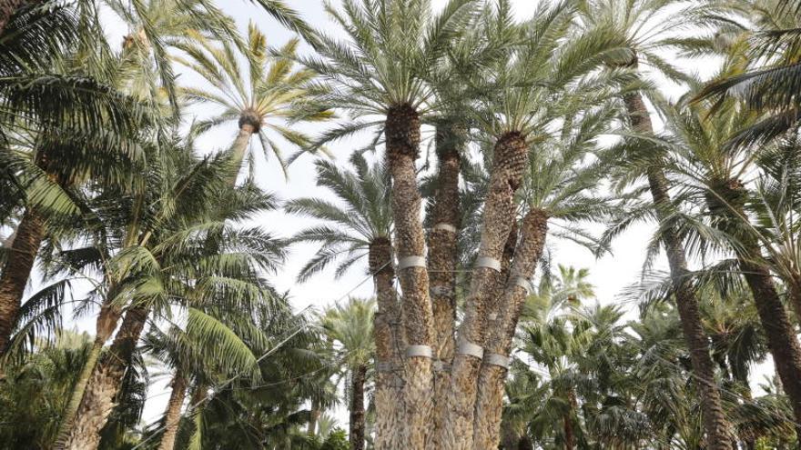 La familia Orts celebra 100 años de la compra del jardín Huerto del Cura en Elche