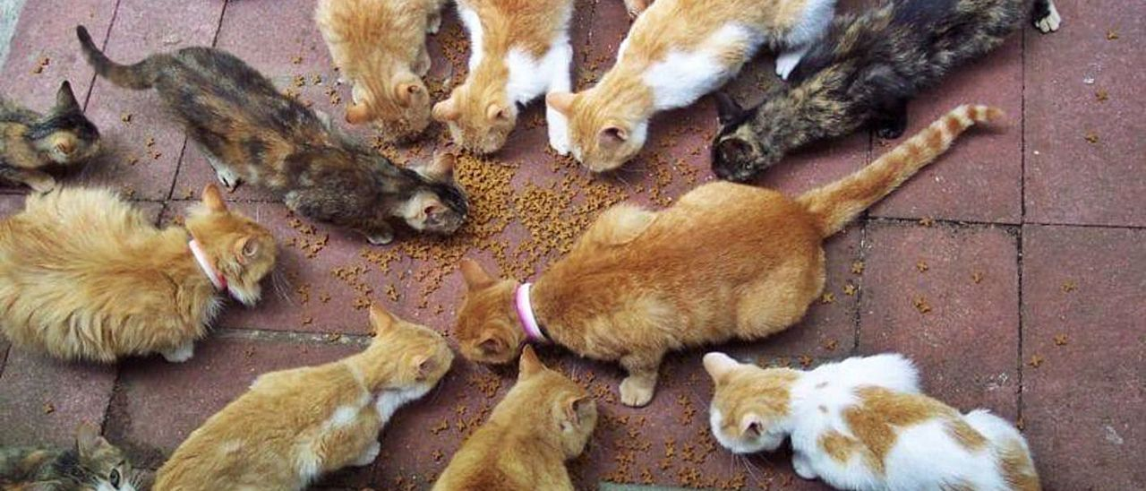 Imagen de archivo de una colonia de gatos.