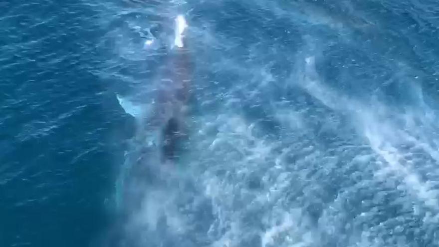 Las ballenas vuelven a dejarse ver en la costa de Dénia