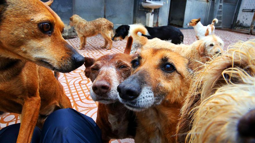 Las mascotas, de vuelta al refugio de A Madroa