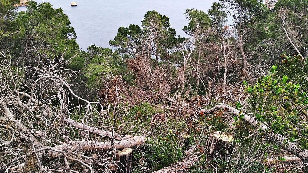 Los tocones y los troncos y ramas talados y dejados caer acantilado abajo.