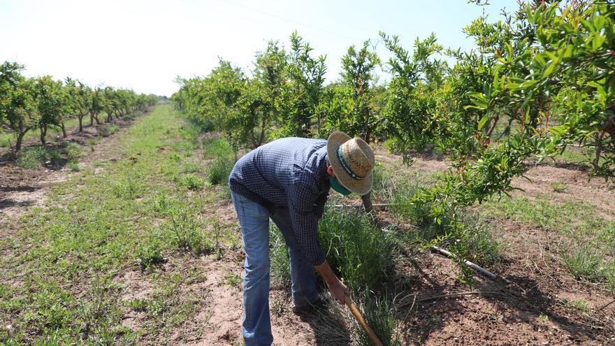 Premios de 900, 600 y 400 euros para la mejor fotografía de paisaje agrario de Castelló