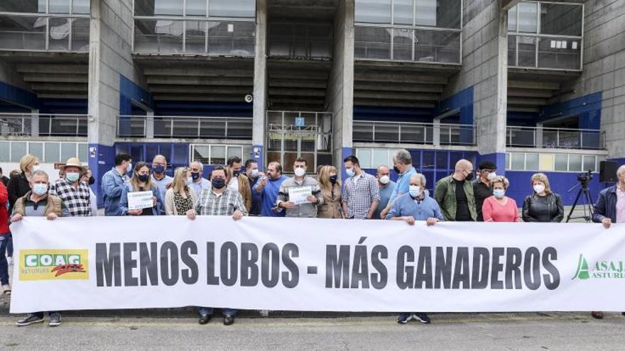 """Los ganaderos asturianos llaman a realizar una """"segunda reconquista"""" del campo frente al lobo"""