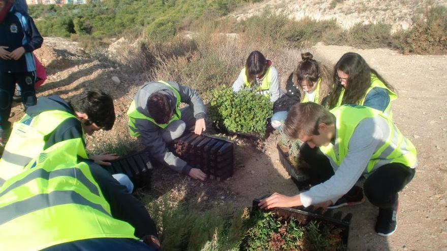 Alumnos del colegio Calasancio de Alicante reforestan la Serra Grossa