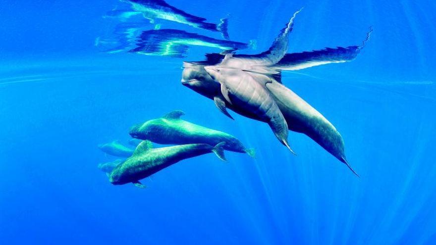 Teno-Rasca, primera zona declarada Patrimonio de Ballenas de Europa