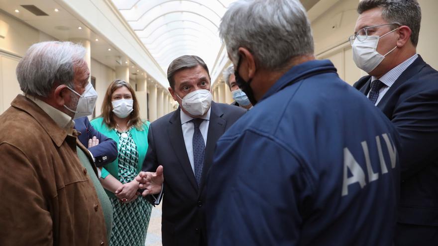Los citricultores de Castellón temen otro año negro por el efecto del 'cotonet'