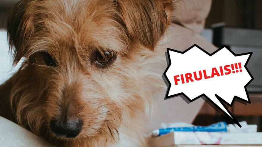 ¿Por qué los perros de los memes se llaman Firulais?