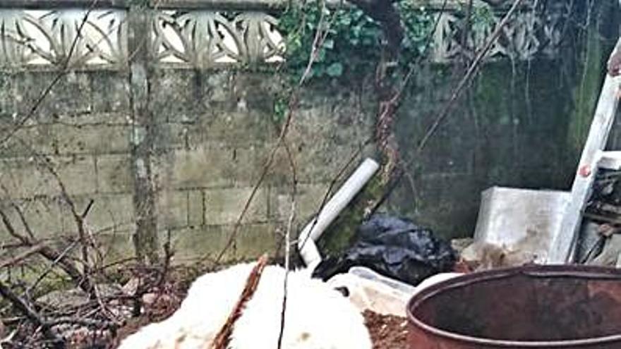 Investigado un vecino de Miño por golpear a su mastín con un apero de labranza