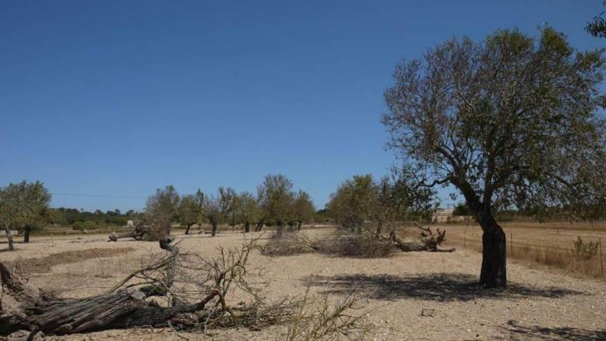 Santanyí pide ayuda para los payeses afectados por la sequía