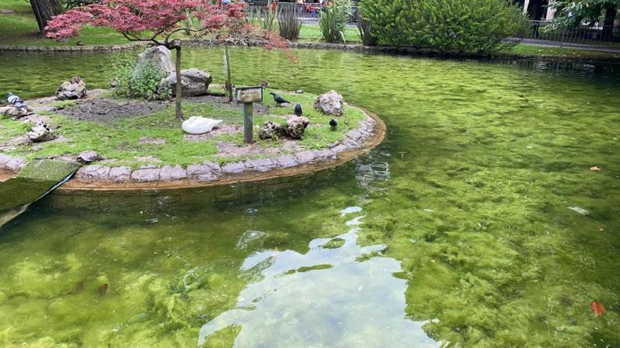 El Estanque de los Patos del Campo, convertido en una selva de algas