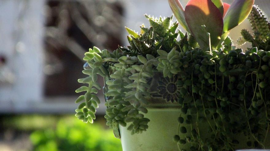 Trucos para cuidar tus plantas con este remedio natural y ecológico