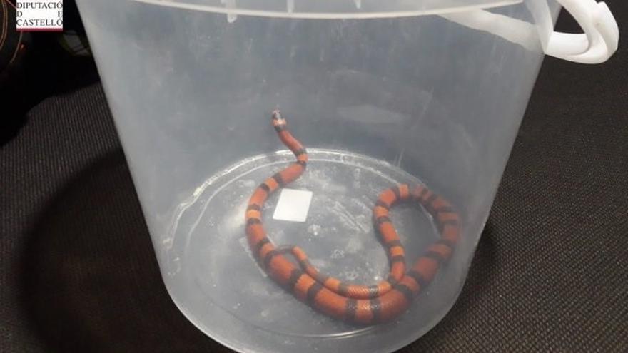 Capturan una serpiente que se había colado en el dormitorio de una vivienda de Betxí
