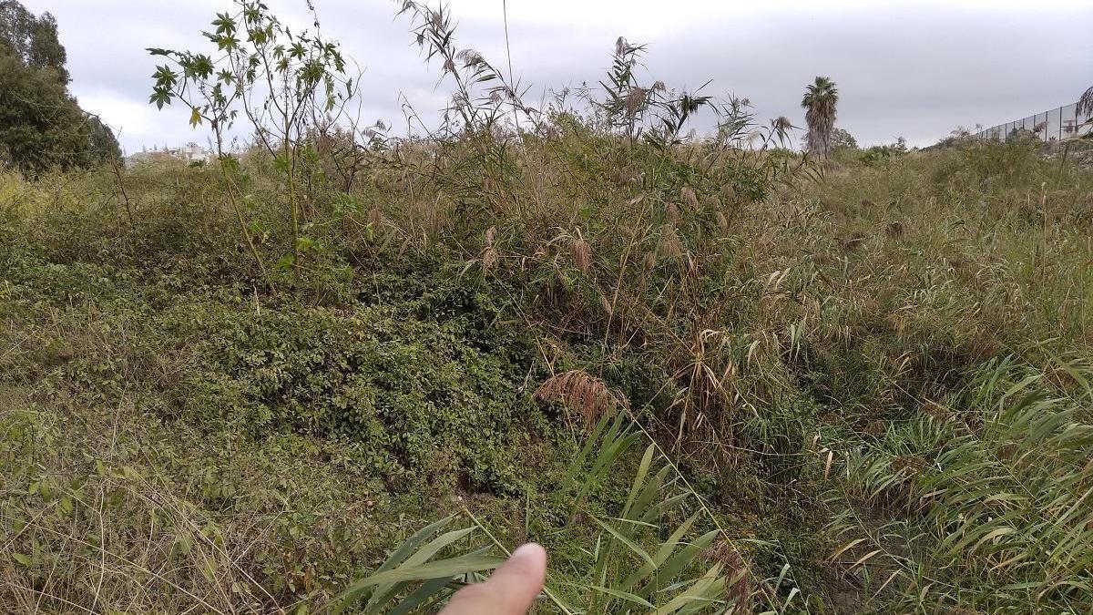 El arroyo del aeropuerto o del Rompedizo, oculto por la vegetación.