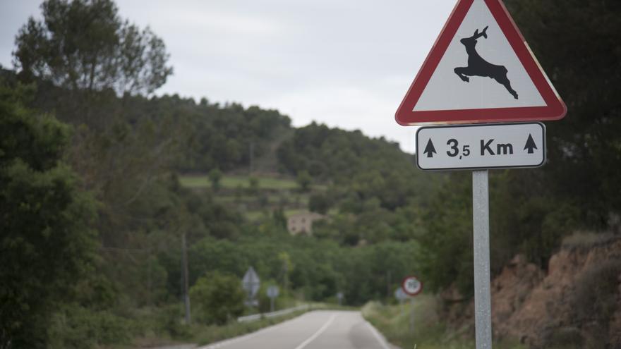 A la regió central hi ha tres accidents cada dos dies amb fauna salvatge