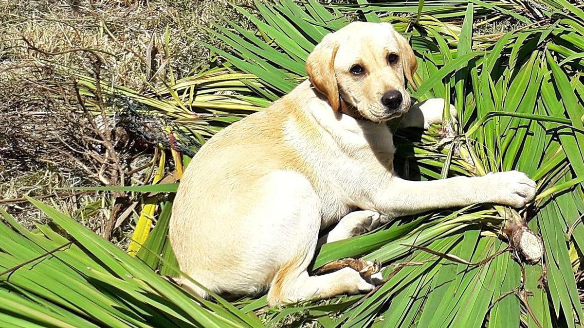 Bambi, el perro que mataron a golpes en Tomiño, tenía solo un año de vida.   | // FDV