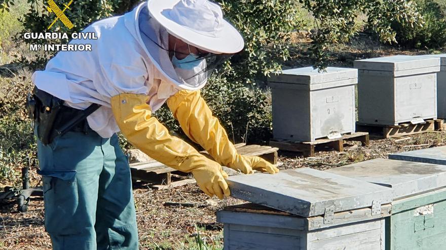 Investigan a un apicultor de Jumilla por utilizar productos prohibidos en 230 colmenas