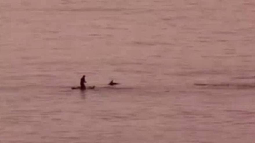 """""""A quien madruga, los delfines saludan"""": La increíble experiencia de un surfista en Canarias"""
