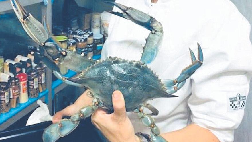Margalida Coll, en su cocina con un cangrejo azul de Cataluña.