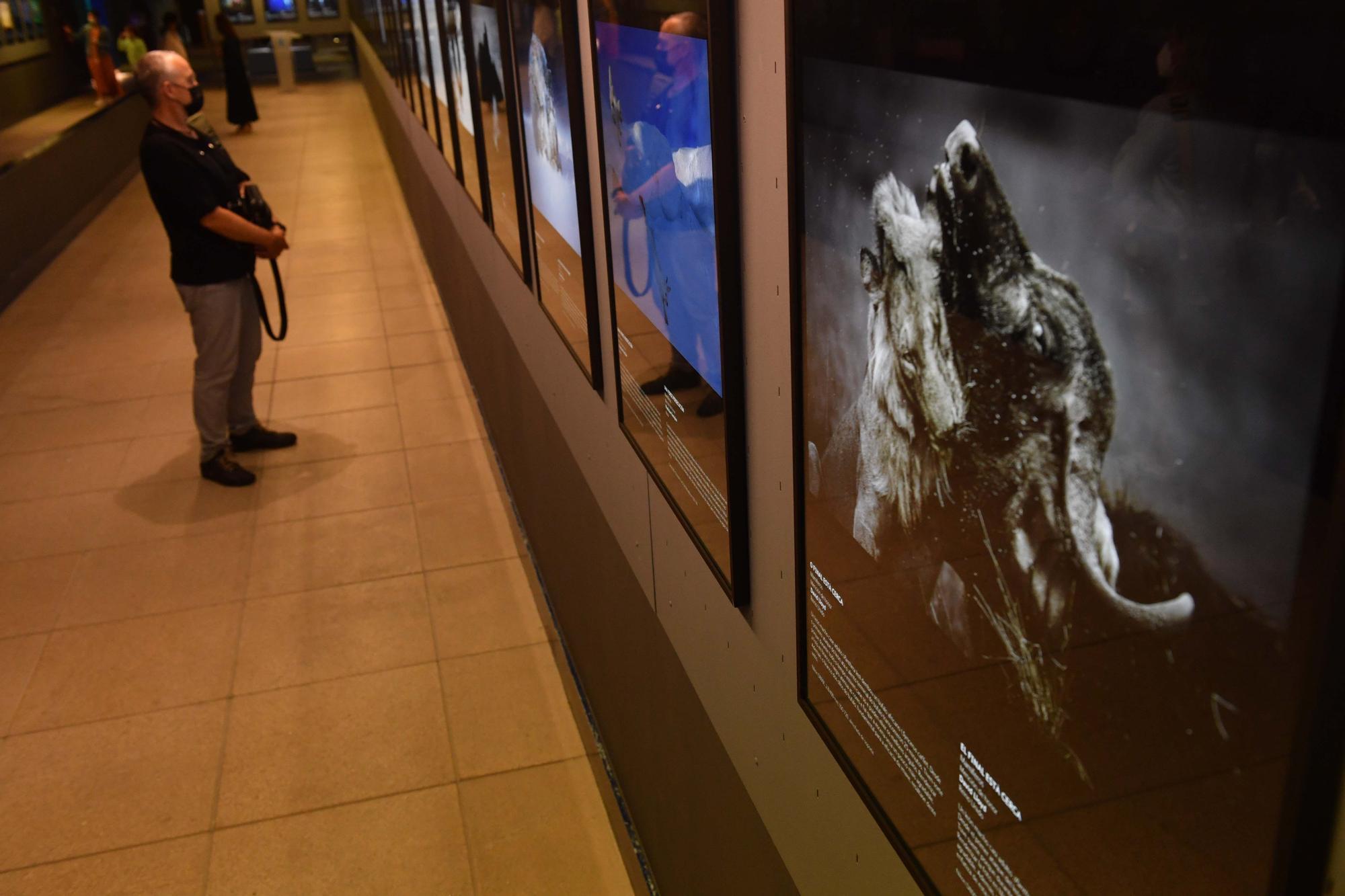 El Aquarium expone imágenes premiadas que muestran la belleza de la naturaleza