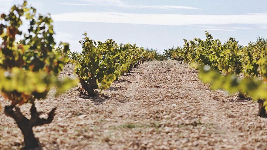 El sector del vino regional pide poner más coto a la producción en La Mancha
