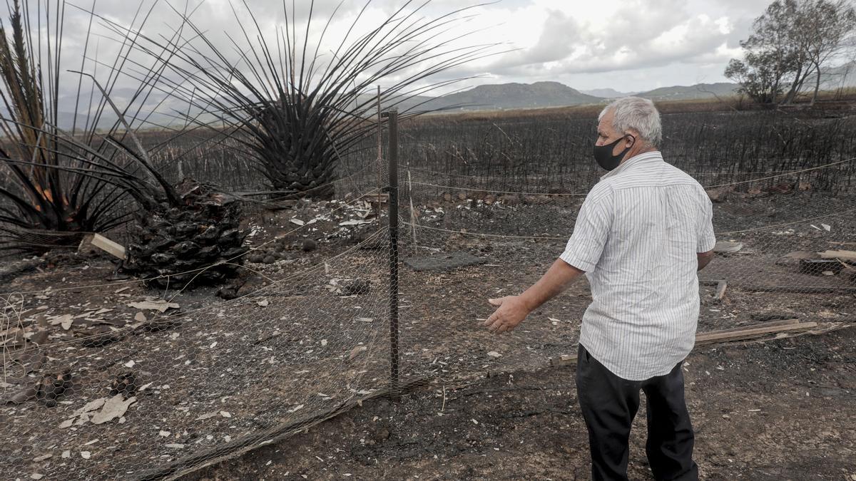 Un vecino contempla el paisaje quemado con las gallinas de su corral carbonizadas.