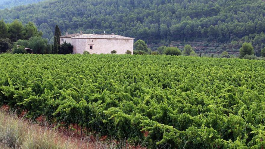 Bodegas Luis Corbí Coloma: una historia de vinos en blanco y tinto