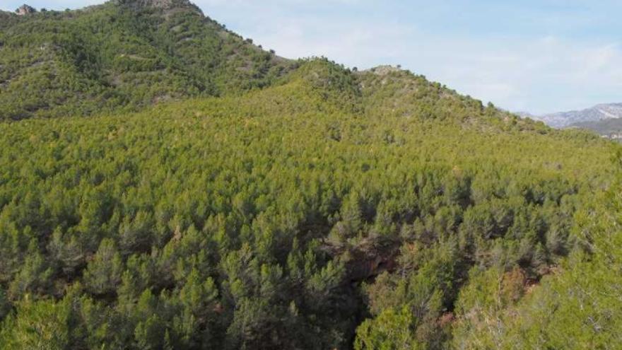 Sendero 9 de la Gran Senda | Cueva de Nerja - Fuente del Esparto