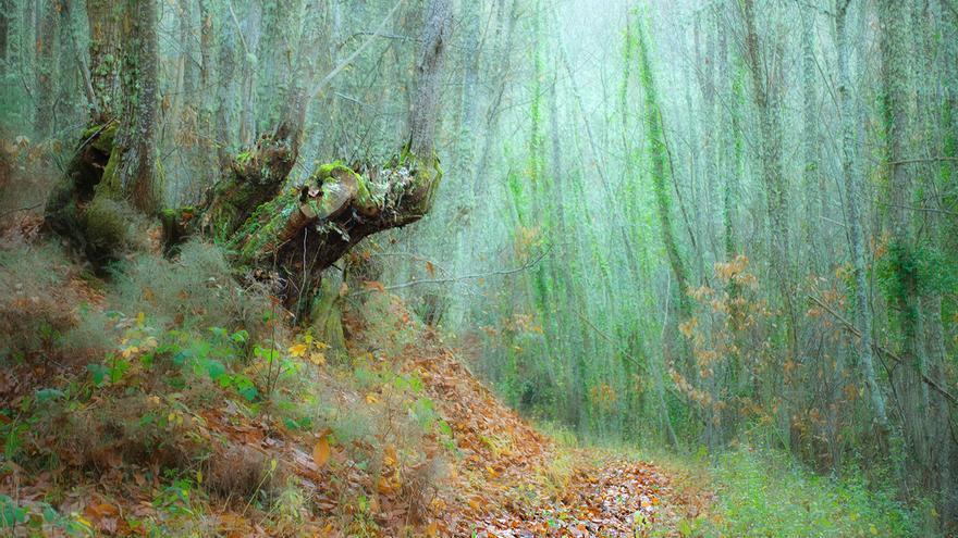 El futuro bosque terapéutico de un pueblo de León