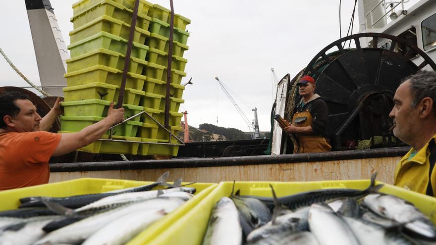 Dos de cada tres barcos se apuntan a la costera de xarda, menguada por el brexit
