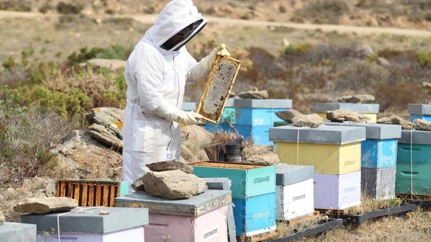 Primer premi per la mel que produeixen els apiaris al Parc Natural de Cap de Creus