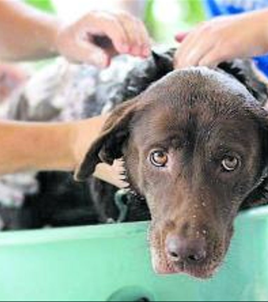 Un perro pasado por agua