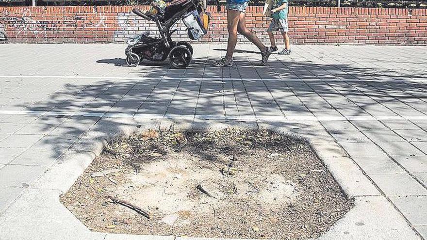 El Ayuntamiento se compromete a plantar en un año árboles en los 1.800 alcorques vacíos